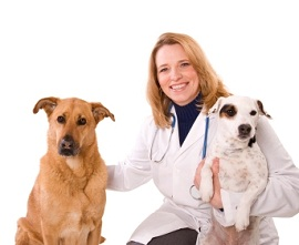 Arthritis supplement for dogs