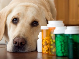 what is the proper vitamin dosage for dogs