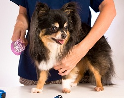 dog grooming small dogs